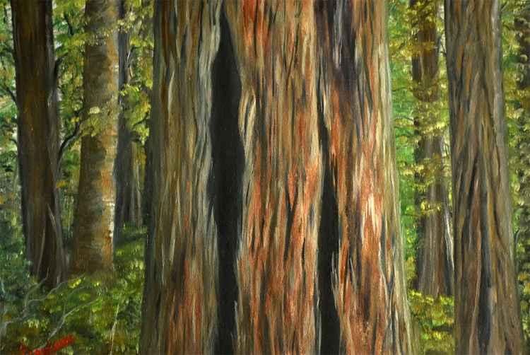 Tree Closeup -