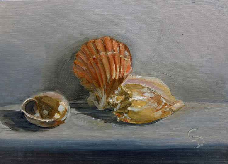 Seashells no. 2 -