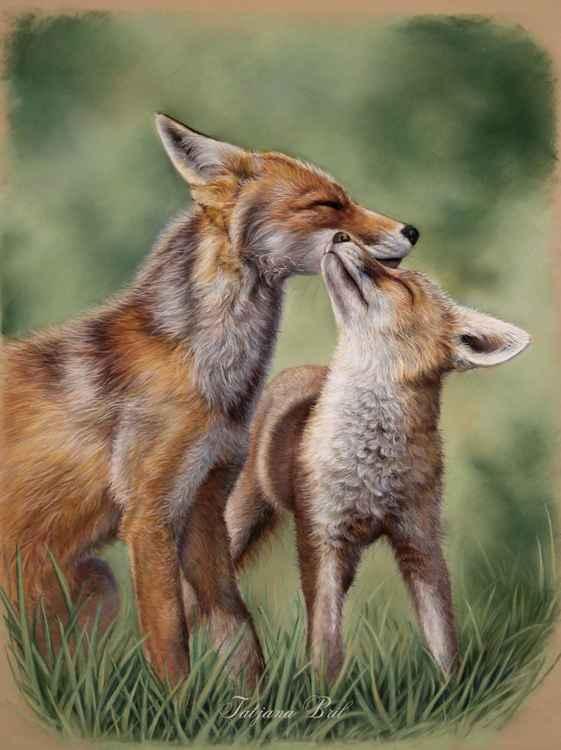 Fox love -