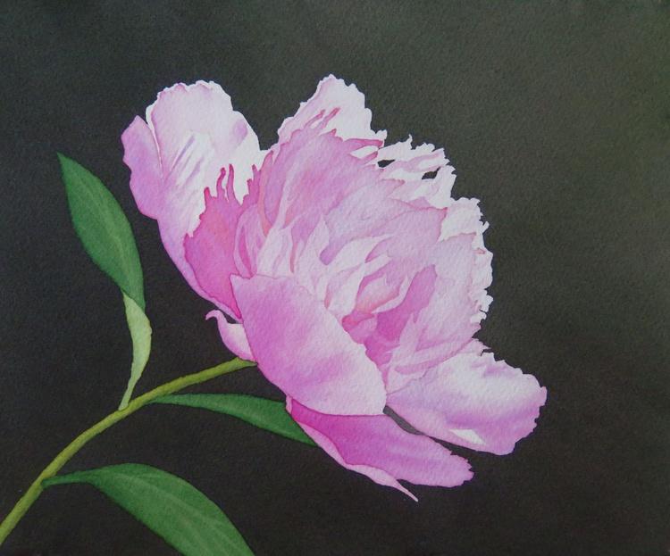 Pink Peony - Image 0