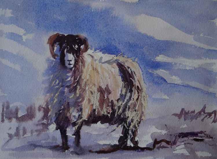 Winter Ewe -