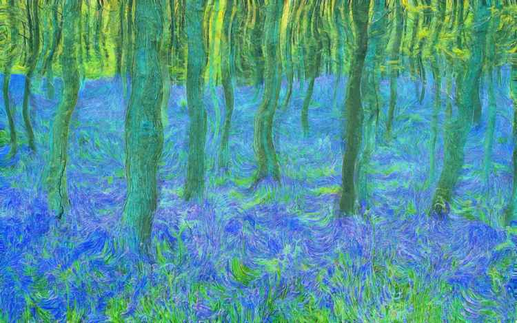 Bluebells in Woodland -