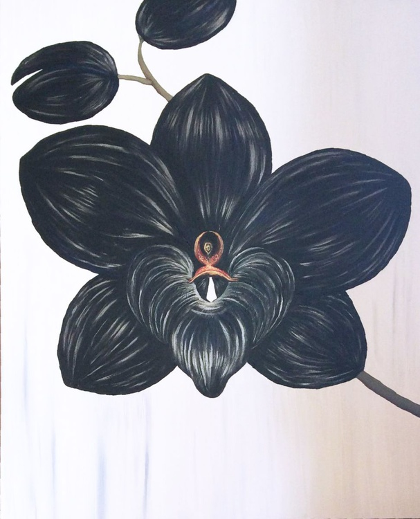Black Orchid - Image 0