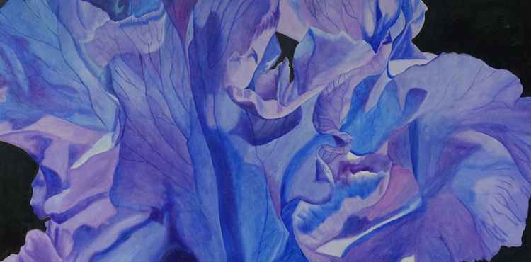 Purple and Blue Iris -