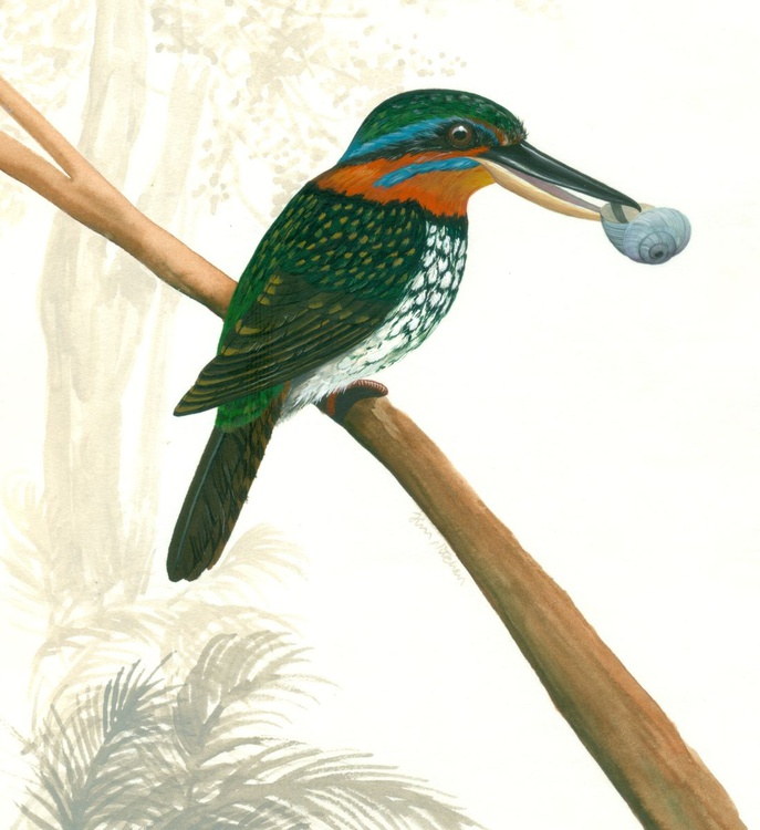 Spotted Wood Kingfisher - Image 0