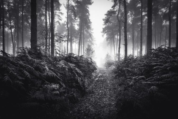 Beyond the Ferns - Image 0
