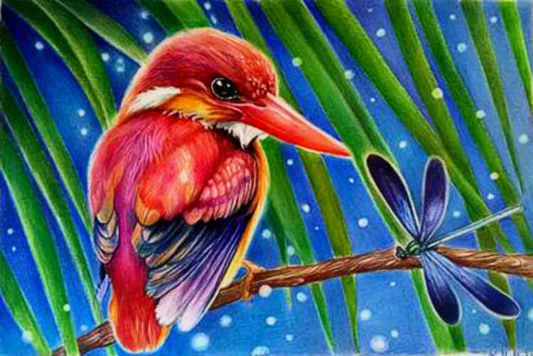 Rufous Backed Kingfisher . -