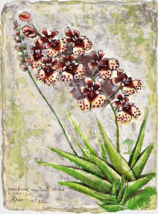 Oncidium equitant Orchid in color 1 - Image 0