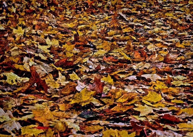 Autumn Leaves - Hahnemühle Photo Rag - Image 0