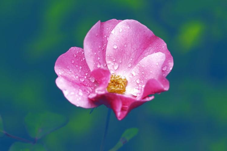Tiny Roses IV, 2015 - Image 0