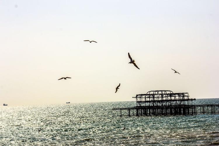 Brighton THE original pier (Limited edition  1/20) 18X12 - Image 0