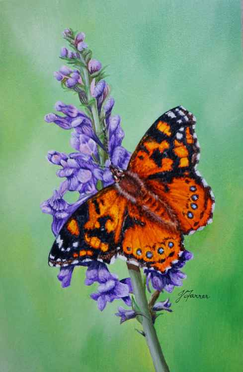Painted Lady on PurpleToadflax 5x7.5inch £90 -