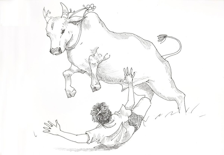 Bull fight - Image 0