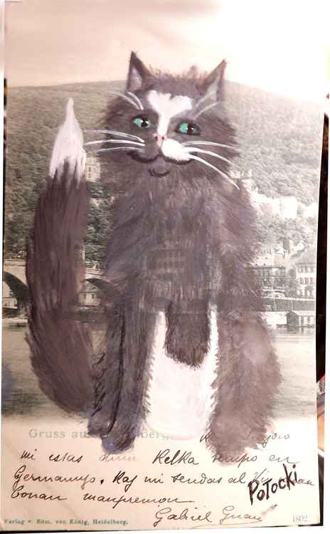 Behold Stumpy the 3-Legged Cat!- Cats of May Series -
