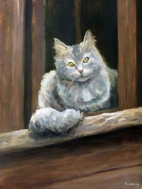Cat on a Window -