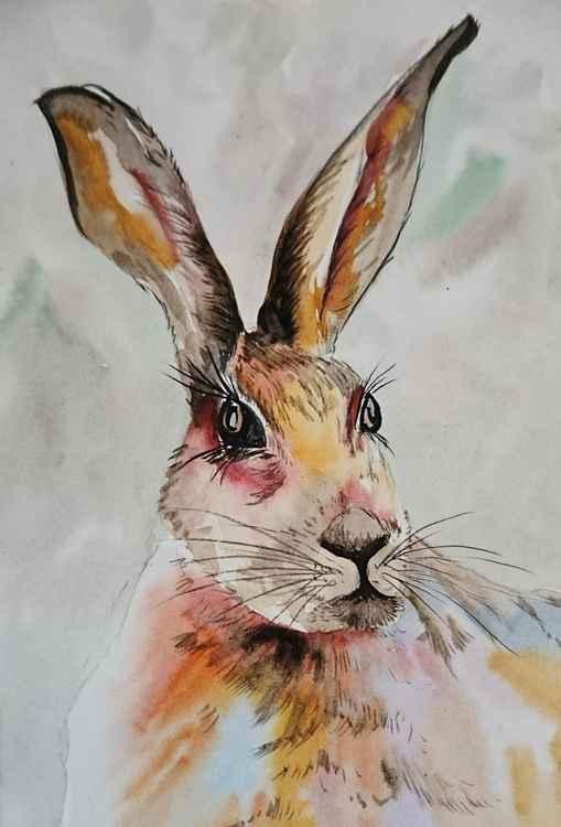 Hare 1 -