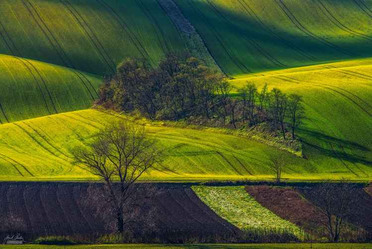 The fields and shadow play