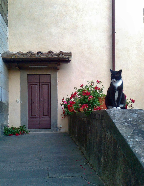 Alena , la gatta del Monastero - Image 0