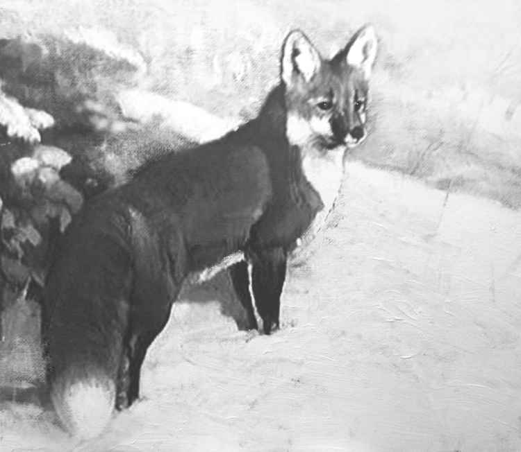 Red Fox (in progress)
