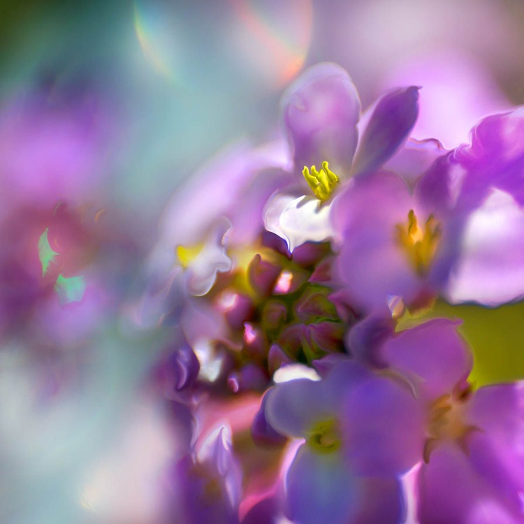 Sprites in the Enchanted Forest  - A Nursery of Blooms - Image 0