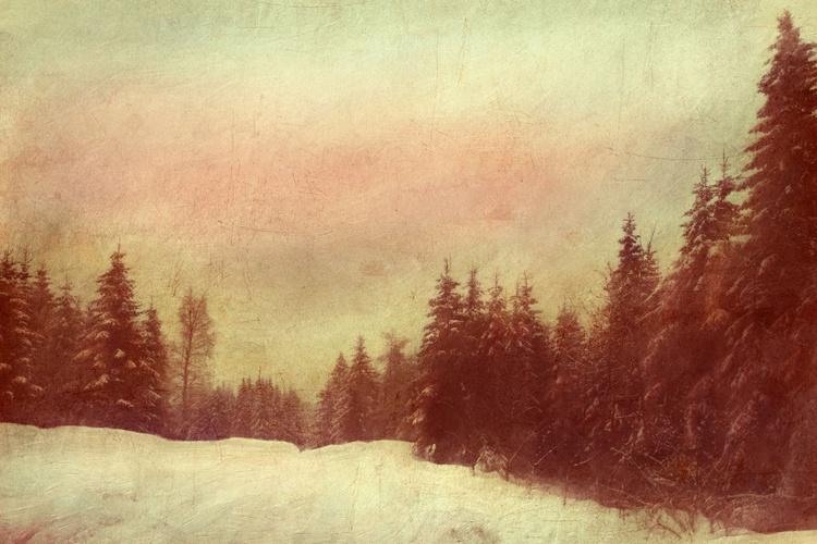 Snow tracks home - Image 0