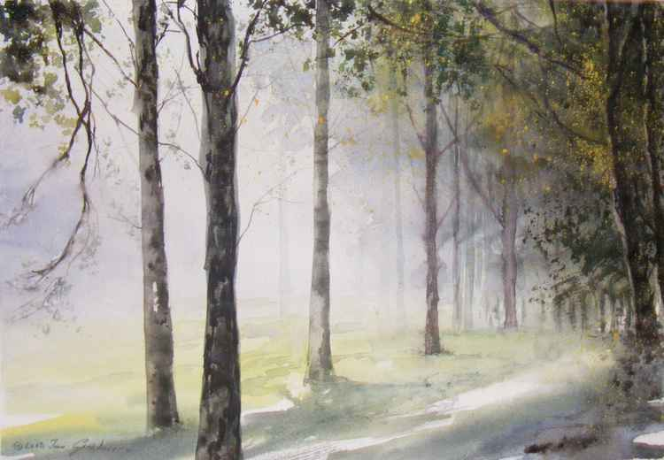 Fog in the forest -