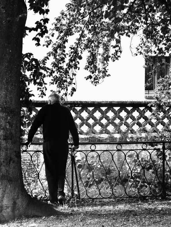 Old Man, Old Tree -