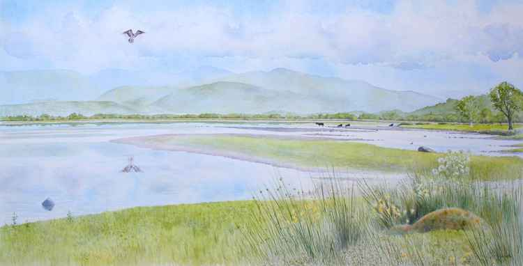 Osprey fishing - Bassenthwaite Water -