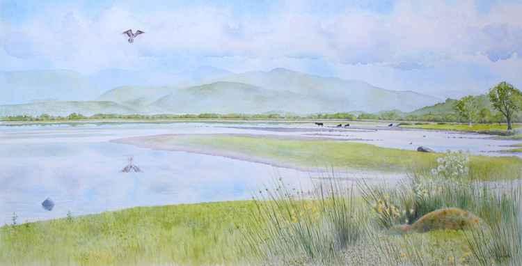 Osprey fishing - Bassenthwaite Water