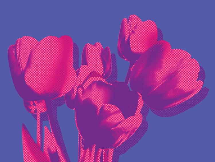 Tulips on blue - Image 0