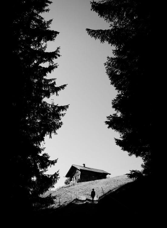 Between The Pines - Image 0