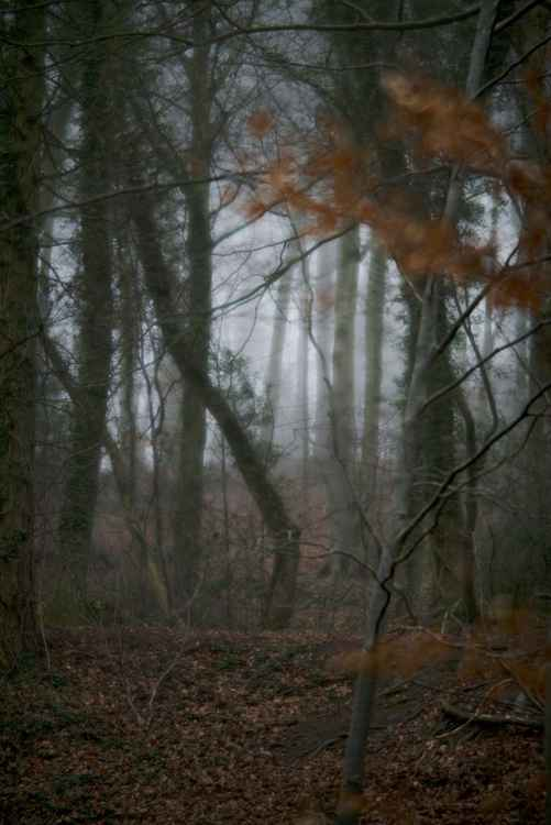 Foggy Forest -