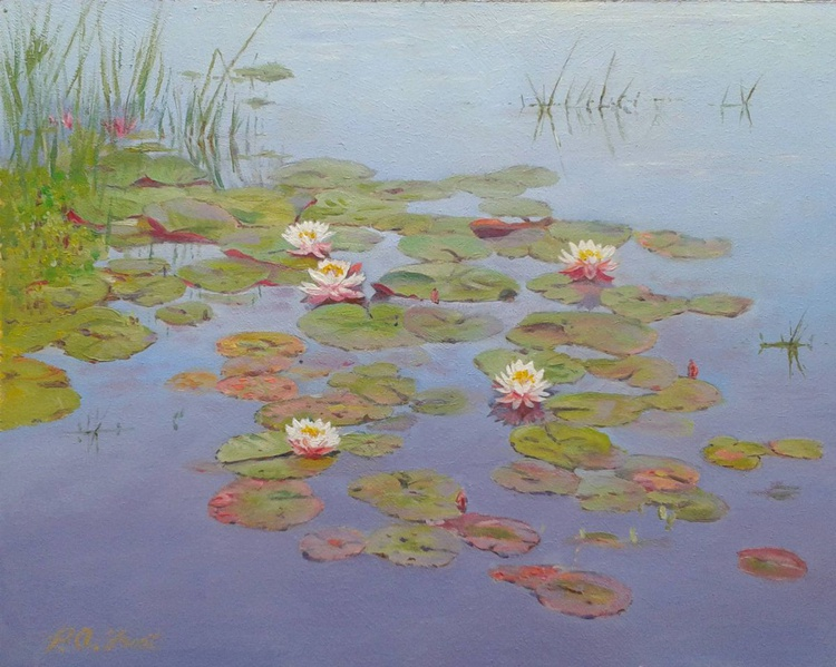 Water Lilies, flowers on Little Hatchet pond , New Forest, peace and tranquility - Image 0