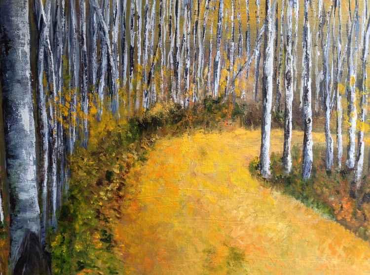 A Beech Forest -