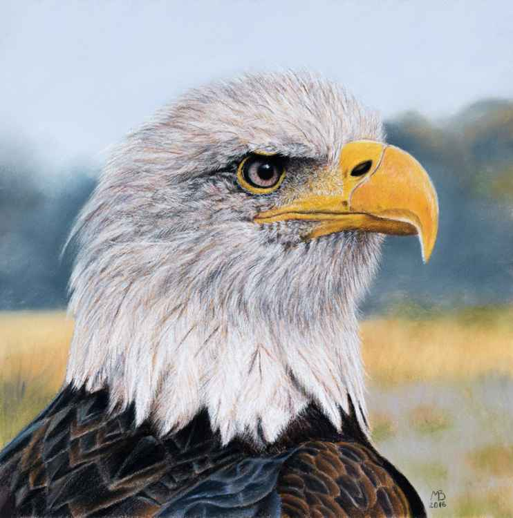 "Original pastel drawing ""Bald eagle"" -"