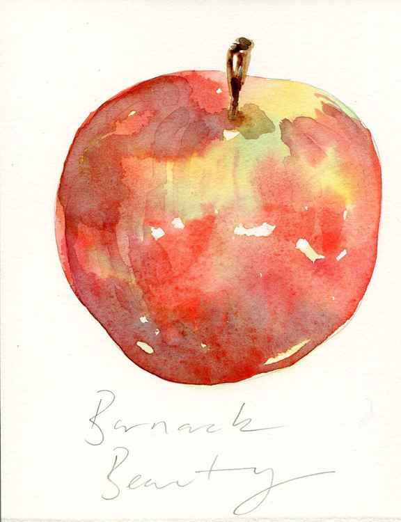 Barnack Beauty Apple Watercolour