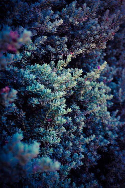"""Bush with purple flowers"" - Image 0"