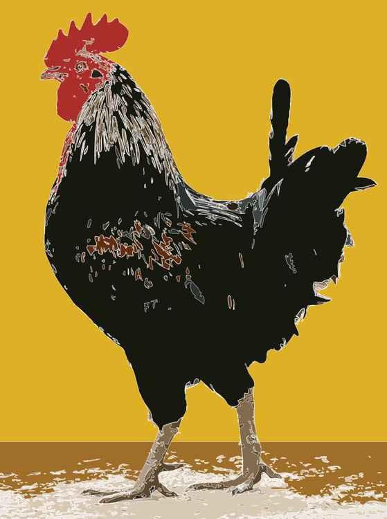 Spanish Cockerel -