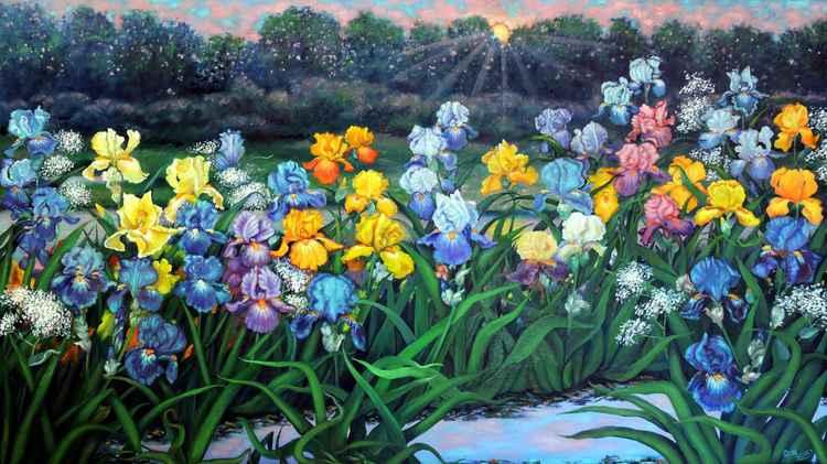 Parading Irises