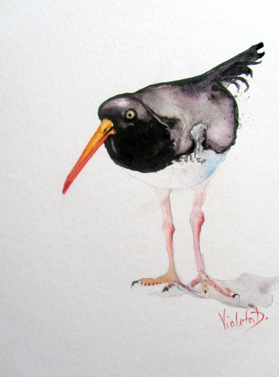 The Oystercatcher - Image 0
