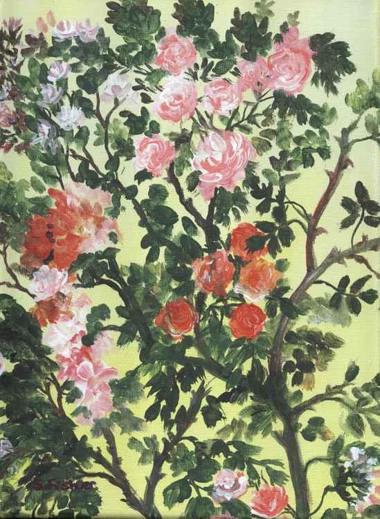 roses (bush) -