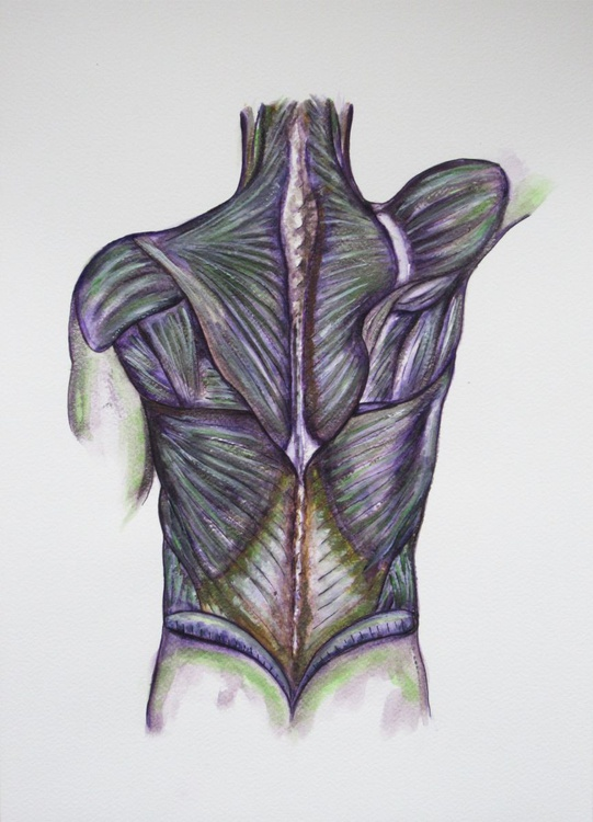 Musculature of the Back - Image 0