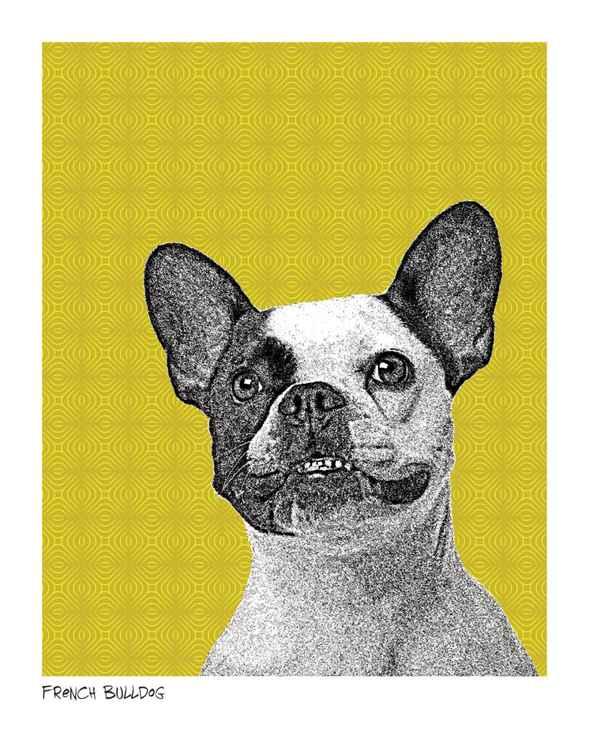 French Bulldog -