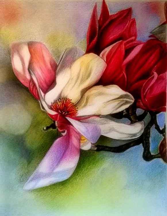 Mulan Magnolia -