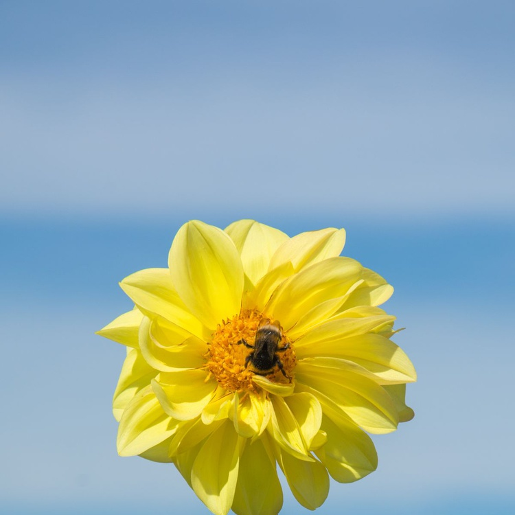 Bee on flower. - Image 0