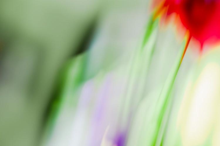 Lé Red Tulip - Image 0