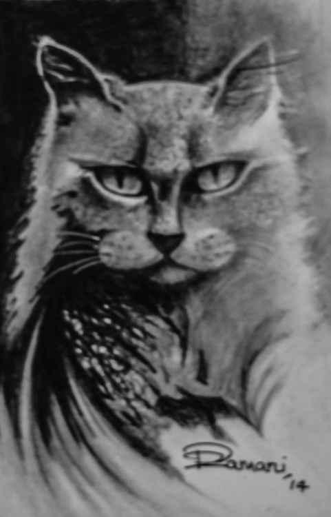 Samurai Cat -