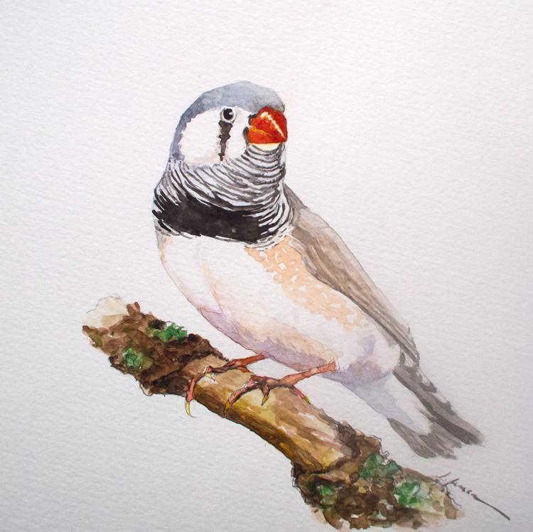 Zebra Finch - Image 0