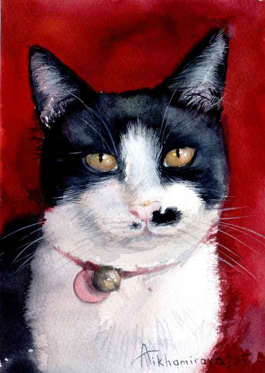 Tuxedo Cat on Ruby Red