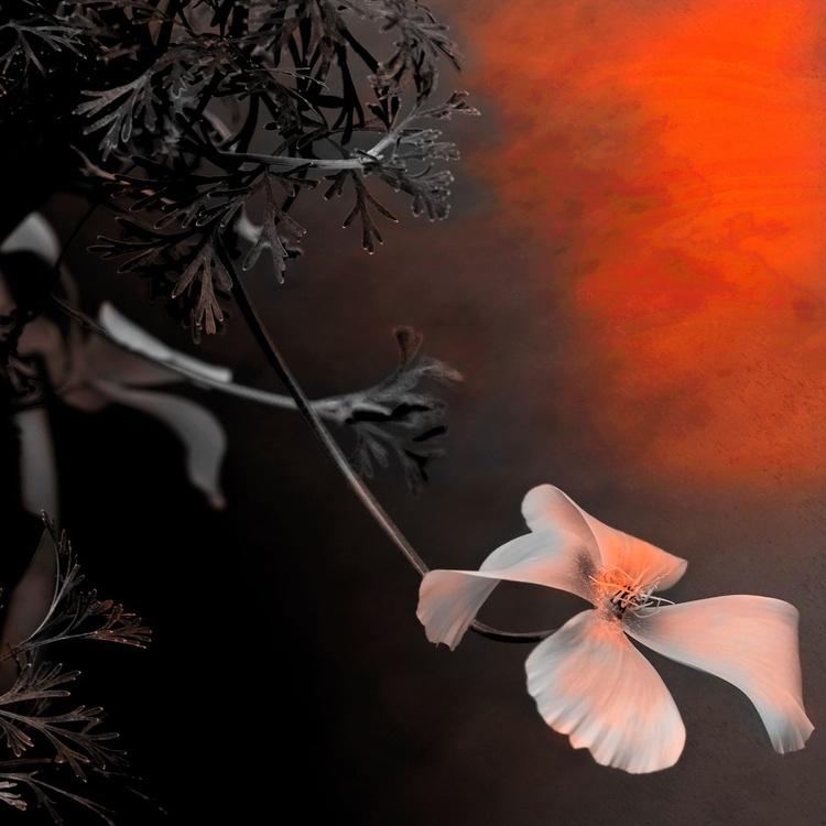 Last Light Flower - Monoprint - Image 0